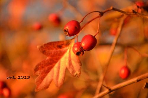 Podzimní čarování - autorská fotografie