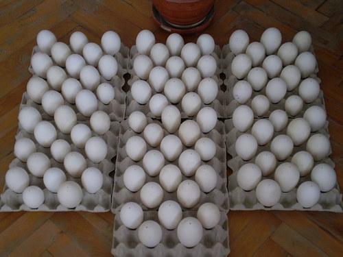 kachní vajíčka...výfuky
