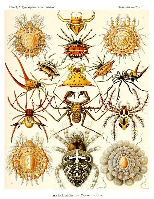 Pavoučci a roztoči