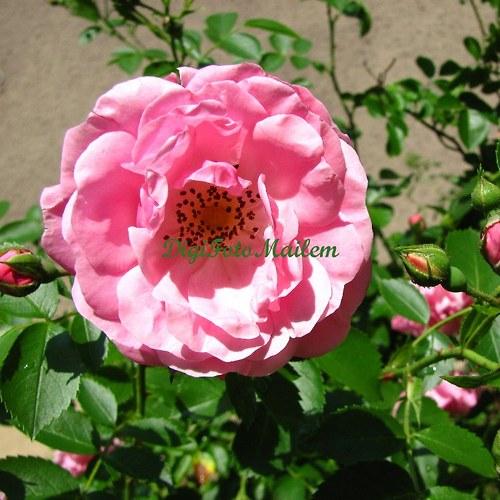 Kvetoucí šípky