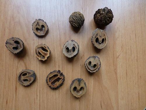 Skořápky černého ořechu