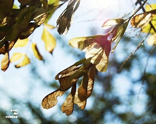Křídla - autorská fotografie