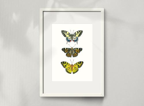 Motýli - malba, A4