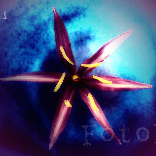 Noční květ