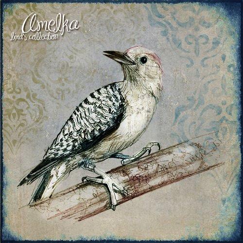 Ptačí kolekce obrázků - art 2