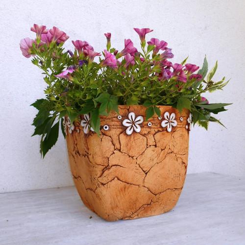 hranatý květník velký - bílé kytičky