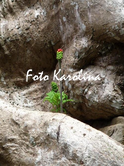 Fotografie Kambodža - Květina v kořenech stromu