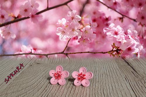 Sakura - peckové náušnice