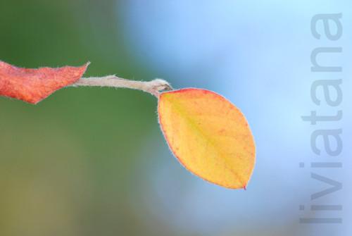 podzimní vzkaz