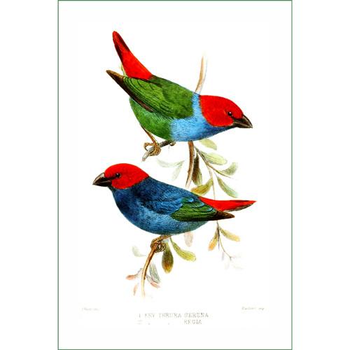 ptáci (32)  (látkový panel)