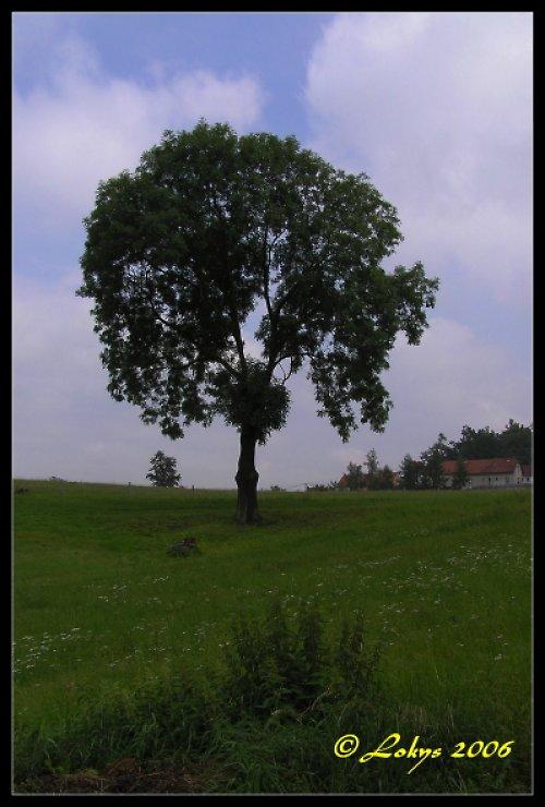 Strom uprostřed louky