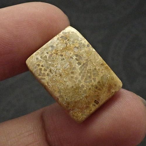 Přírodní fosilní korál - velký kabošon čtyřboký