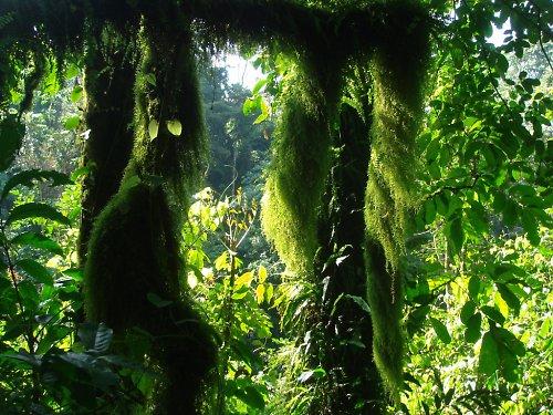 Zelené krajkoví