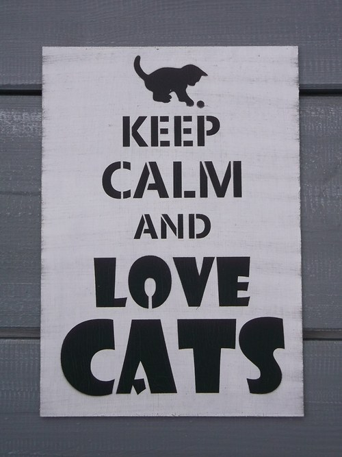 Cedule KEEP CALM and love cats