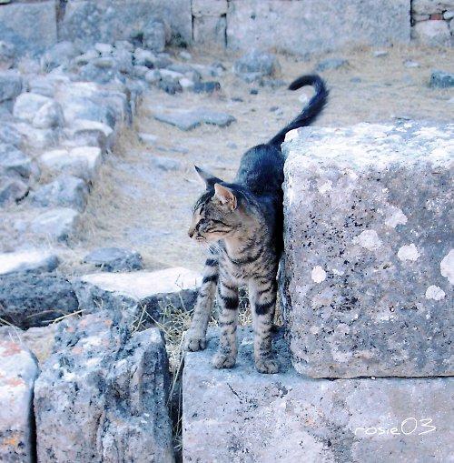 Kočka na ostrově Kos