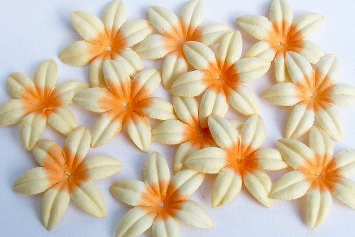 Klematis žlutooranžový - 8 kusů