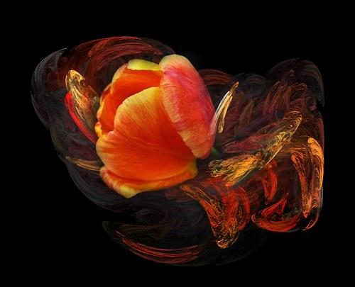 Mísa s tulipánem