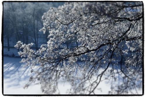 zima za oknem II