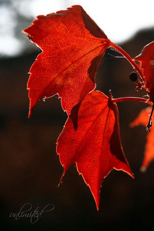 "Fotografie \""Krásy podzimu\"""