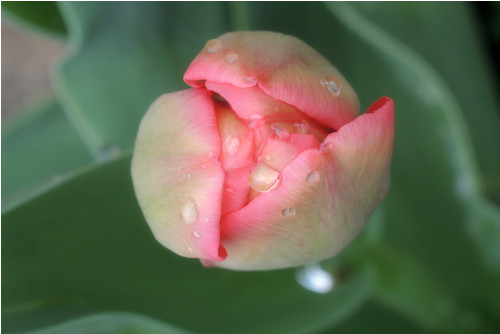 Poezie přírody... vyznání, kapa deska