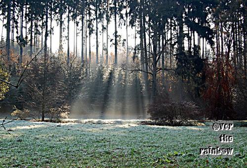 Kouzelný les – autorská fotografie