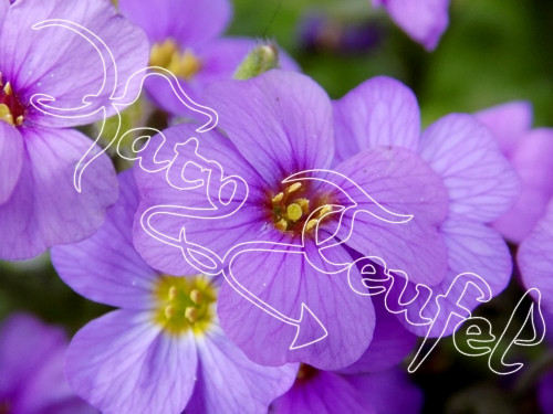 Fialové květinky