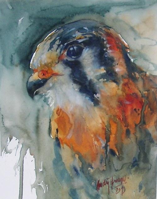 Dravec,originální akvarel