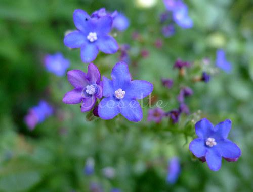 Modrá ... ach modrá ... - autorská fotografie