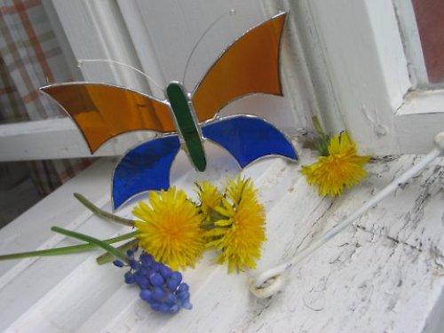 motýl medovo-modrý