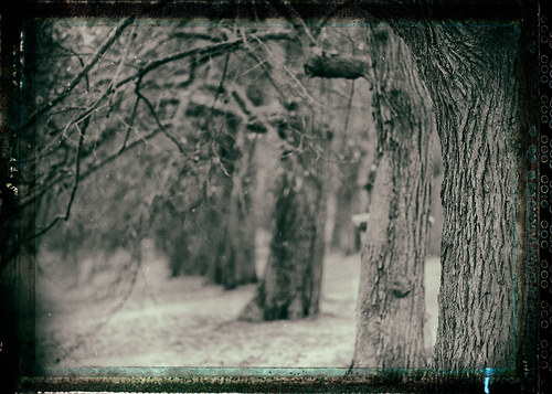 Krajina se starými stromy 1 - fotografie 40x30cm