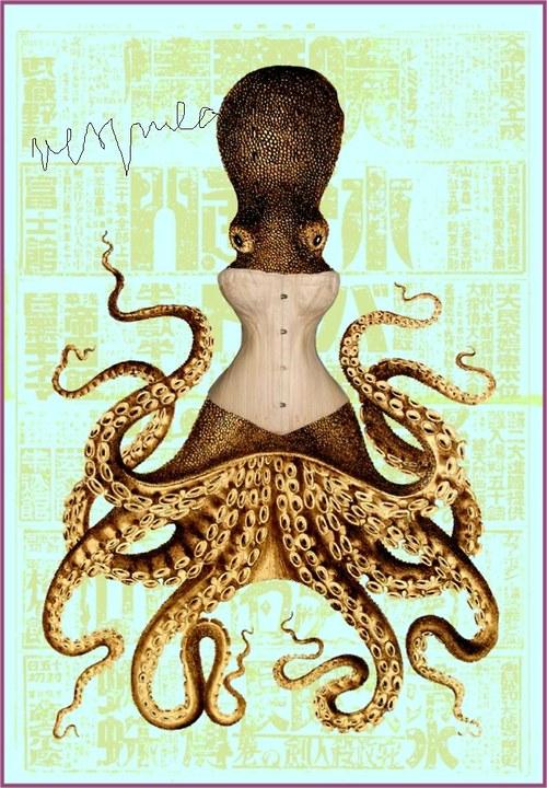 Chobotnice parádnice