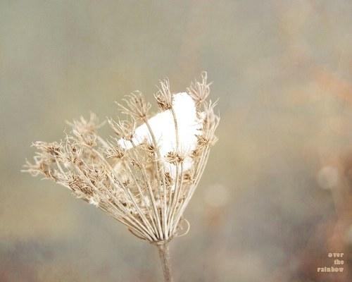 Winter Impressions III