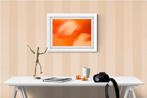 Oranžová gladiola fotografie 30x20