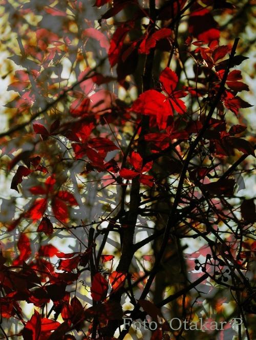 Podzimní imprese