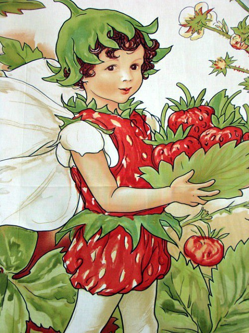 Strawberry panel multi