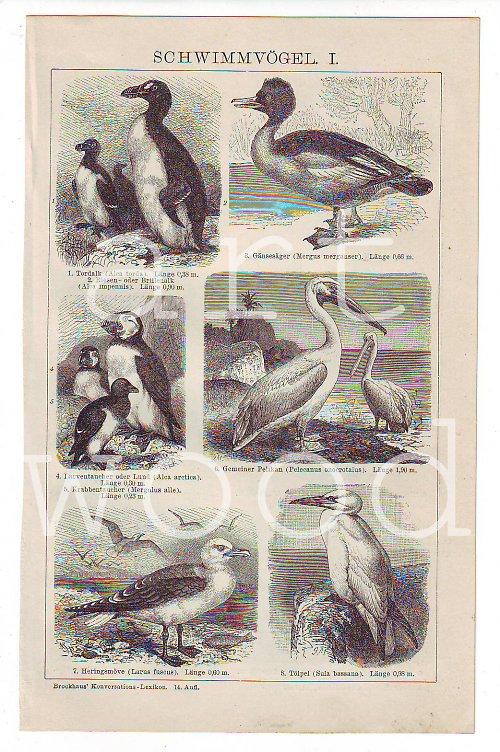 VODNÍ PTÁCI kachna, tučňák, pelikán... - č. 810