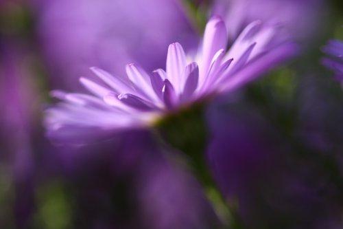 V říši květin II.