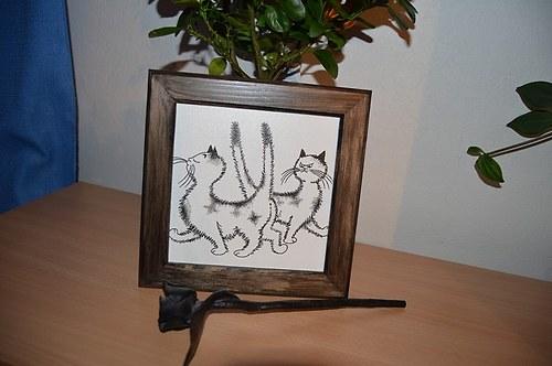 Obrázek - kočky