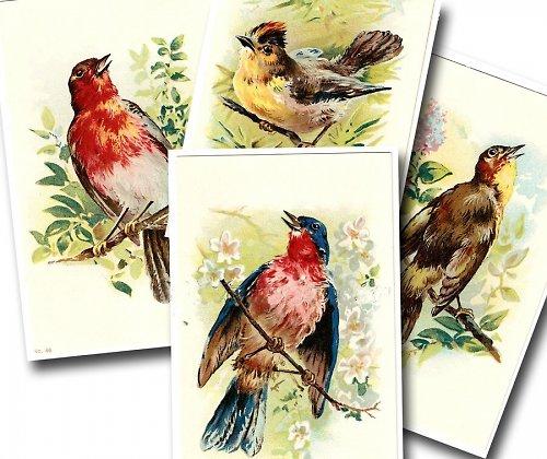 Nažehlovací obrázky - Ptáčci - cena za všechny