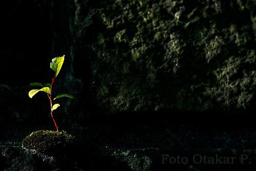 Za světlem