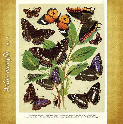 Motýli - str. 8 - formát A4