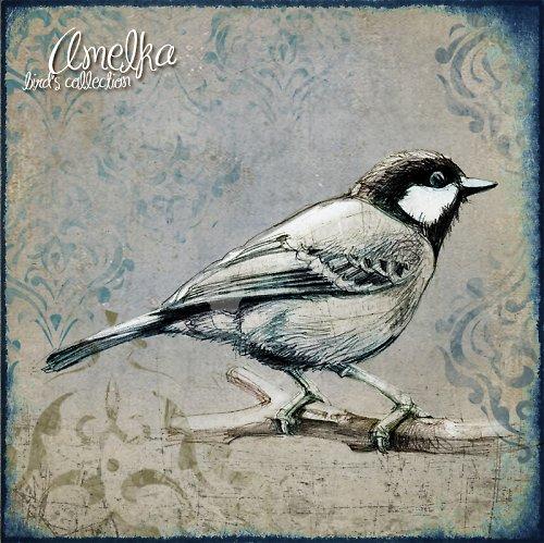 Ptačí kolekce obrázků - art 3
