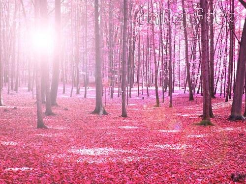 Růžový les