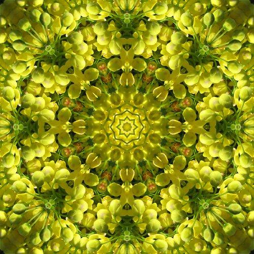 Mandala rozkvetlé mahony
