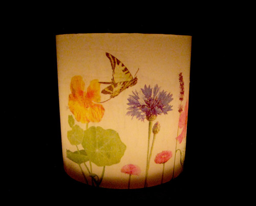 Lampion - rozkvetlá louka