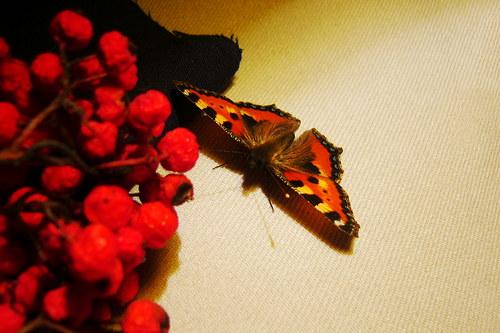 Motýlí...