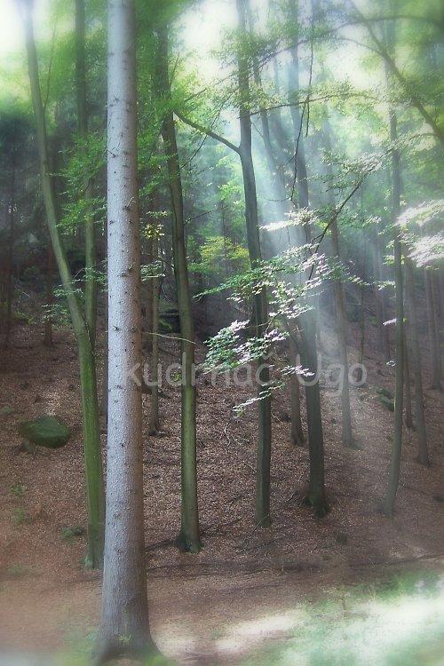 Lesní ticho...