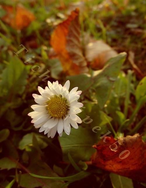 Sedmá krása podzimu