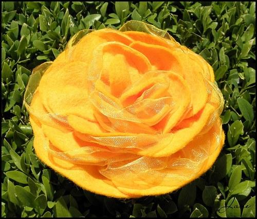 Medová růže