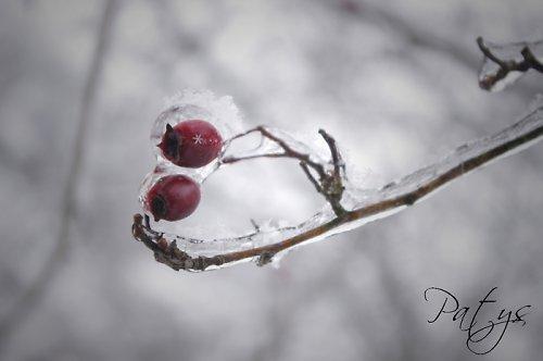S razítkem zimy ...
